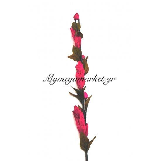Αποξηραμένο λουλούδι φούξια Στην κατηγορία Αποξηραμένα Λουλούδια | Mymegamarket.gr