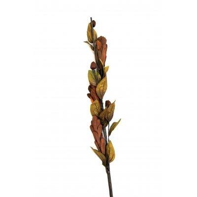 Αποξηραμένο λουλούδι καφέ