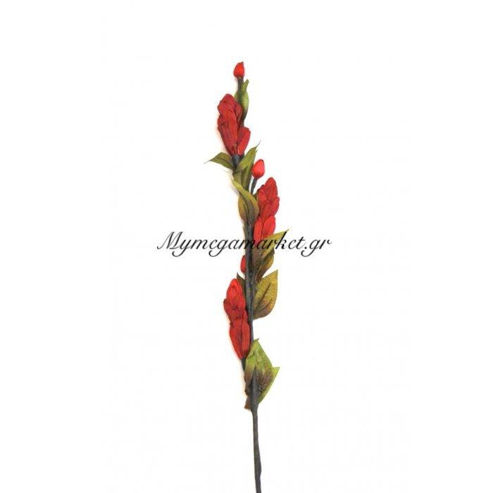Αποξηραμένο λουλούδι μπορντώ | Mymegamarket.gr