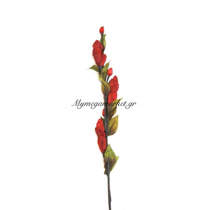 Αποξηραμένο λουλούδι μπορντώ